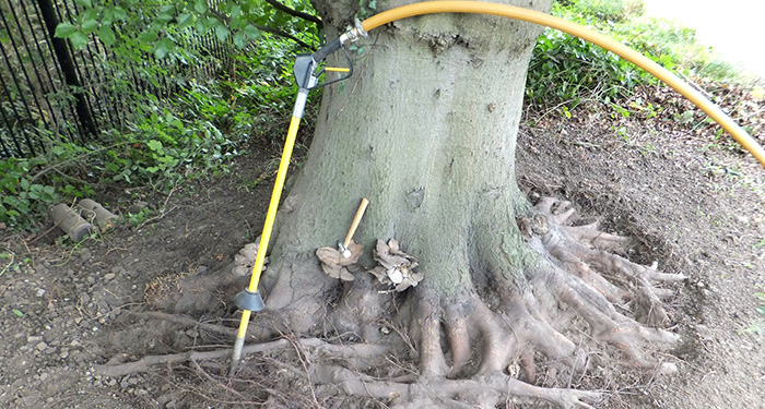 Air spade tree roots